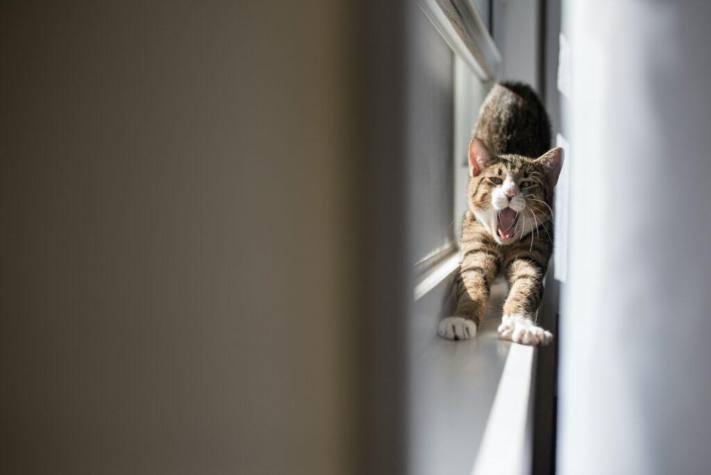 jak uszczelnić okna, uszczelnianie okna, jak uszczelnić okno, jak uszczelnić okno plastikowe, jak uszczelnić okna nazimę, jak uszczelnić okna silikonem, jak uszczelnić okna pcv, uszczelnianie okna balkonowego, uszczelnianie okna taśmą, jak uszczelnić okna drewniane, jak uszczelnić okna dachowe, jak uszczelnić okna pianką, jak uszczelnić okna drewniane nazimę, jak uszczelnić okno dachowe, jak uszczelnić okno plastikowe, jak uszczelnić okno tarasowe, jak uszczelnić okno przy parapecie, jak uszczelnić okno plastikowe przy parapecie, jak uszczelnić okno dachowe nazimę, jak uszczelnić okno drewniane, uszczelnianie okna dachowego, uszczelnianie okna pianką, uszczelnianie okna nazime